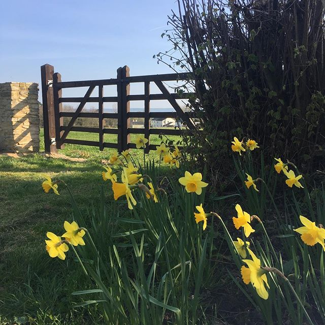 Wonderful spring mornings at Rock Farm ☀️🌲 #airbnbhost #airbnbsuperhost #weekendaway #henhouse #hendo #familygetaway #staycation #visitgloucestershire #deanwye #forestofdean #gloucestershirewedding #holidayaccommodation #countryretreat #countrylife #springtime #daffodils