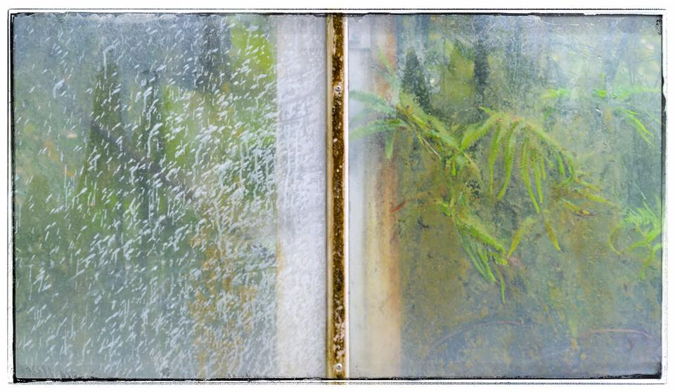 Greenhouse Diptych