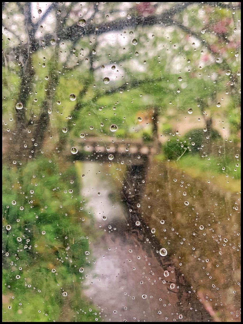 The Philosopher's Path, as seen through an accidental umbrella