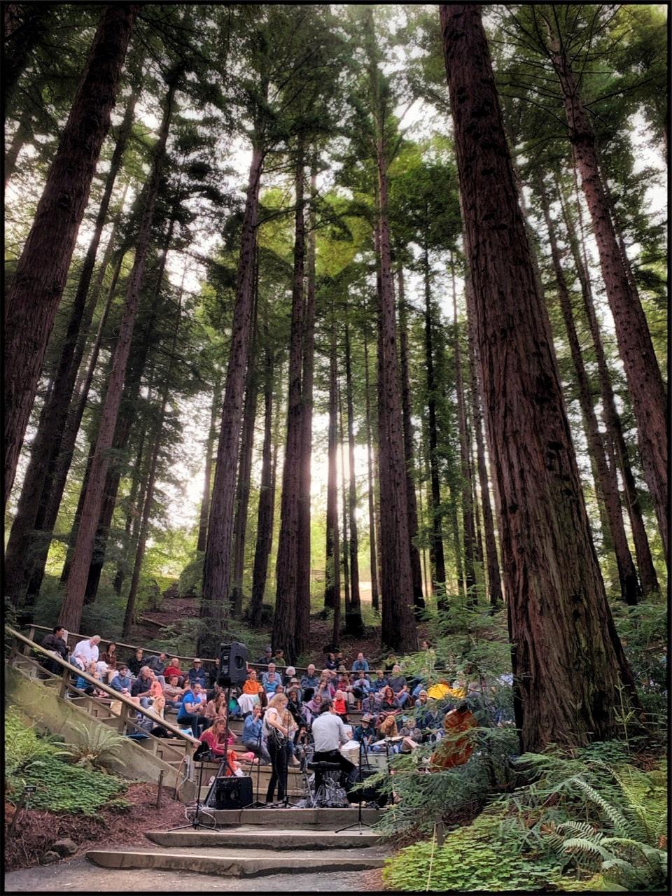 Redwood Grove Concert by Becky Jaffe.jpeg