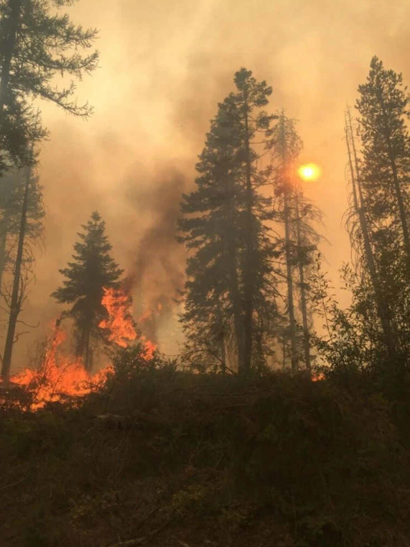 During parts of Boyds Fire, in the Colville area, low-hanging branches and an overabundance of tree saplings provided ladder fuels for fire to spread into the forest's canopy, growing the fire more rapidly. (Photo by Gary Jennings)