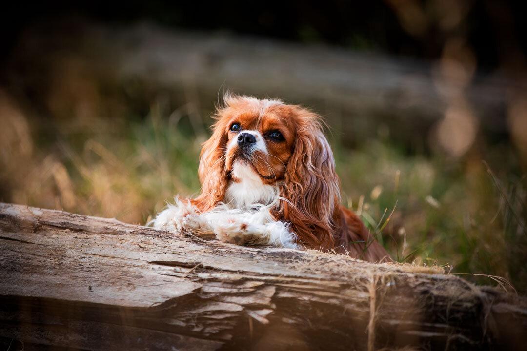 London family & dog photographer