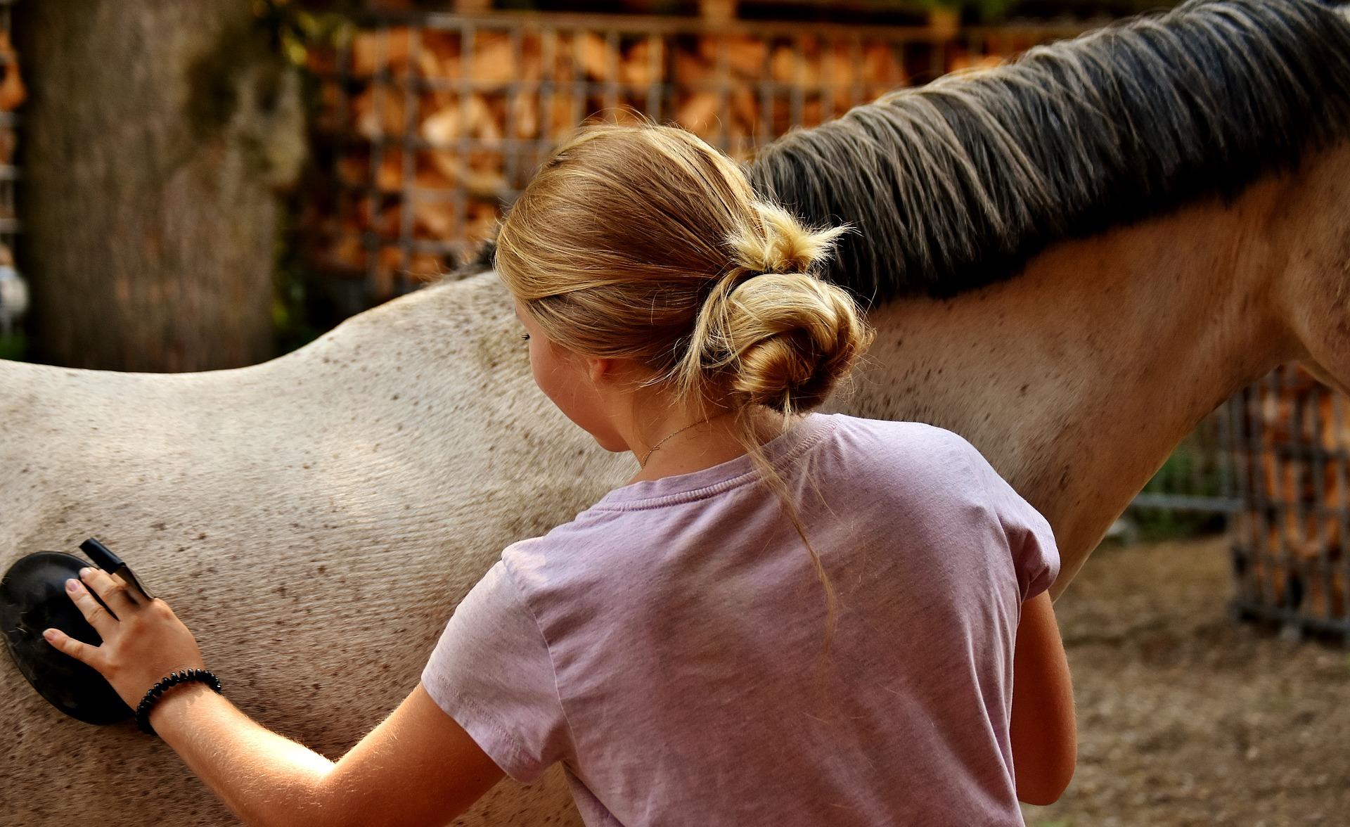 horse-2818941_1920.jpg