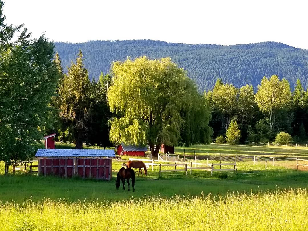 Full service horse boarding at The Elements Ranch in Falkland BC