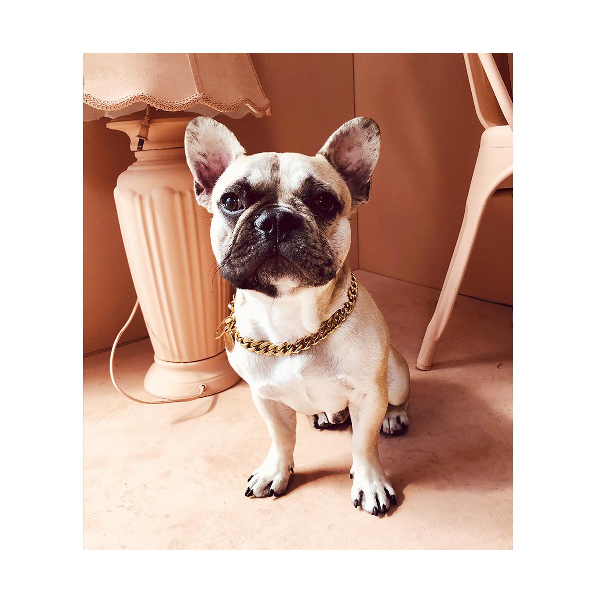 Dog-portrait-photography-studio-los-angeles.jpg