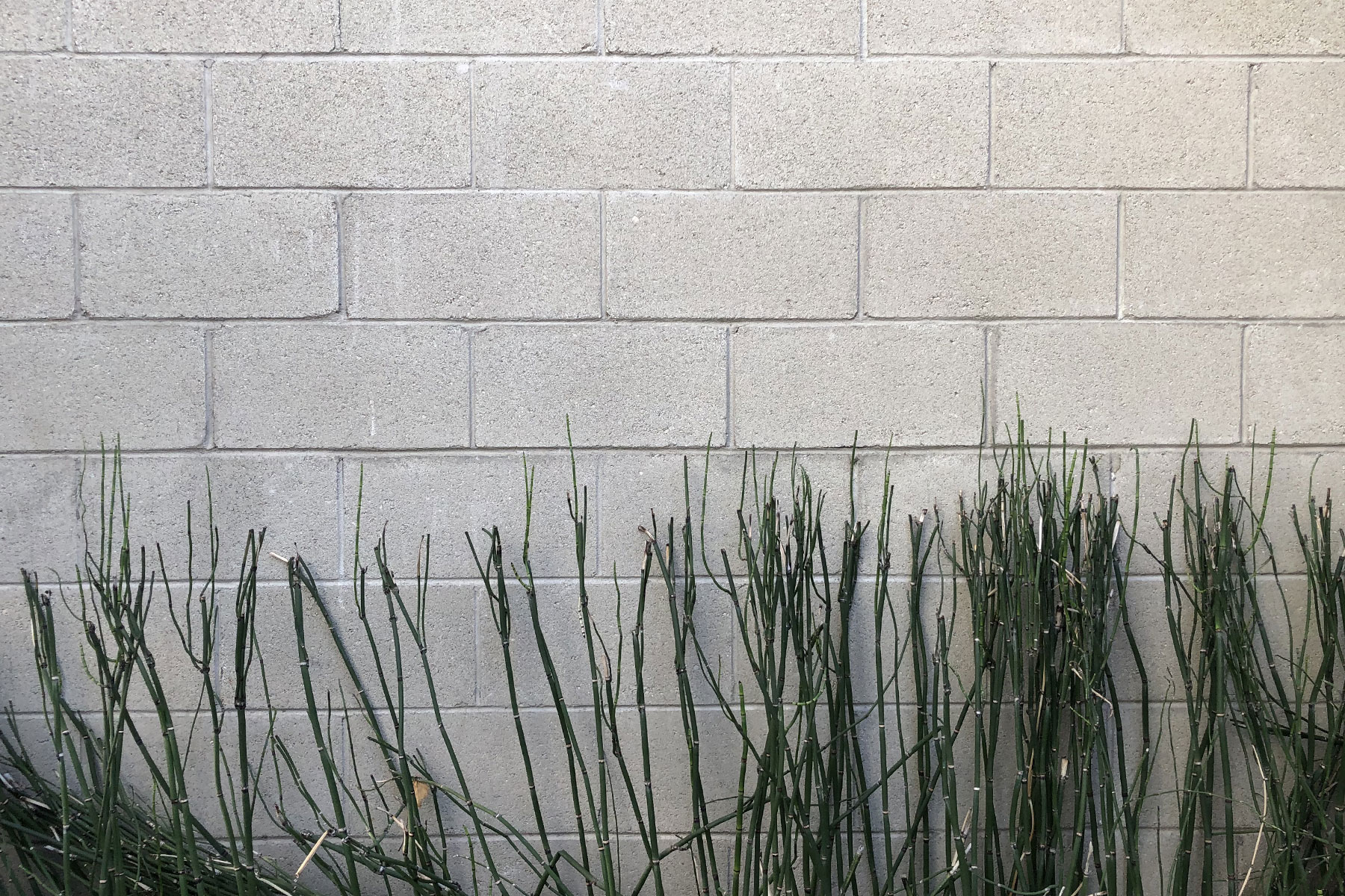 Brick Wall With Bamboo - Outdoor Location