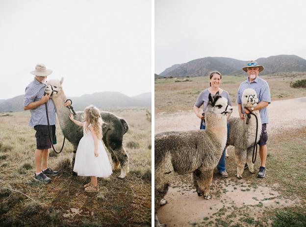 san diego family photographer alpaca