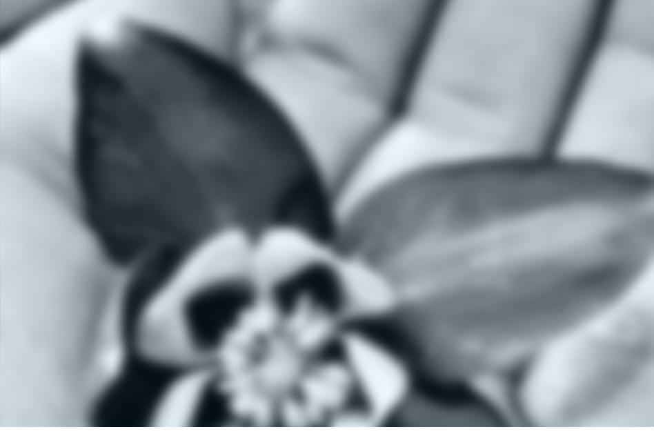 KINTSUGI - Houston - 7pm | October 12, 2018St. Mark's Episcopal Church3816 Bellaire Blvd | map »Featuring Shawn Renzoh Head, ShakuhachiKod Tevis Nav Guntra Kuzmina-JuknaMirroringDavid VayoBashõ's Six Scenes Stephen YipInside My Glass DoorsShawn HeadLorem ipsum dolor sit amet, consectetur adipiscing elit. Aliquam vitae est vitae ipsum vulputate consectetur sed ut nisl. Aliquam eget leo urna. Donec vehicula, erat vitae placerat fringilla, ligula urna consectetur mi, nec ullamcorper odio neque in mauris. Integer sit amet lorem aliquam, lacinia eros vel, aliquet augue. In ultrices in nisl vitae consequat. Interdum et malesuada fames ac ante ipsum primis in faucibus. Ut consequat odio quis massa mollis, non tincidunt quam sodales. Proin lacus lectus, pretium quis mi sit amet, semper aliquet nisi. Quisque bibendum feugiat ligula sit amet faucibus. Suspendisse nec pharetra ante.Sed sit amet tellus lacinia, aliquet nibh id, consequat dui. Etiam non luctus massa. Donec laoreet arcu ut viverra vulputate. Vestibulum et nisi eget dolor vulputate vulputate eu sit amet sapien. Nam vitae dolor et lacus posuere vehicula. Suspendisse id mattis enim, at maximus tellus. Vestibulum molestie sapien tempus, tincidunt libero nec, aliquet justo. Morbi justo ipsum, placerat vitae ante sit amet, consectetur tempus sapien. Vestibulum eu dolor urna. Sed tempor risus sit amet orci rhoncus, eget dignissim augue aliquam. Vivamus semper condimentum mattis. Cras sit amet suscipit massa. Phasellus vel fringilla dolor. Donec lacinia lobortis est a vestibulum.Duis a ex sit amet tellus tristique vestibulum. Aenean feugiat ligula ut dui gravida, vitae viverra risus scelerisque. Sed dictum est quis ipsum laoreet, nec aliquam dolor bibendum. In consequat eu dolor vel sagittis. Duis ut malesuada nunc, maximus cursus dolor. Nunc non sem eget diam scelerisque sollicitudin vitae nec lectus. Mauris dictum ligula sit amet purus cursus, porttitor posuere leo luctus. Integer lacinia lorem nec ipsum ullamcorper, n