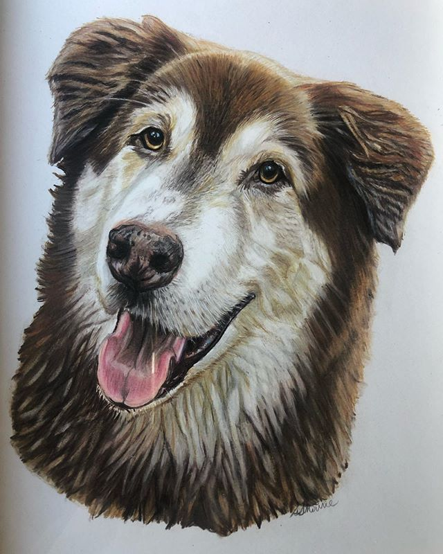 My friend Seleena is an amazing artist, she does beautiful pet portraits and has captured our Bodhi's personality perfectly in this gorgeous piece. Bodhi is such an important part of our family, I'm so happy and honoured to have this to always cherish ❤️