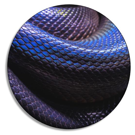 Blue Snake.PNG