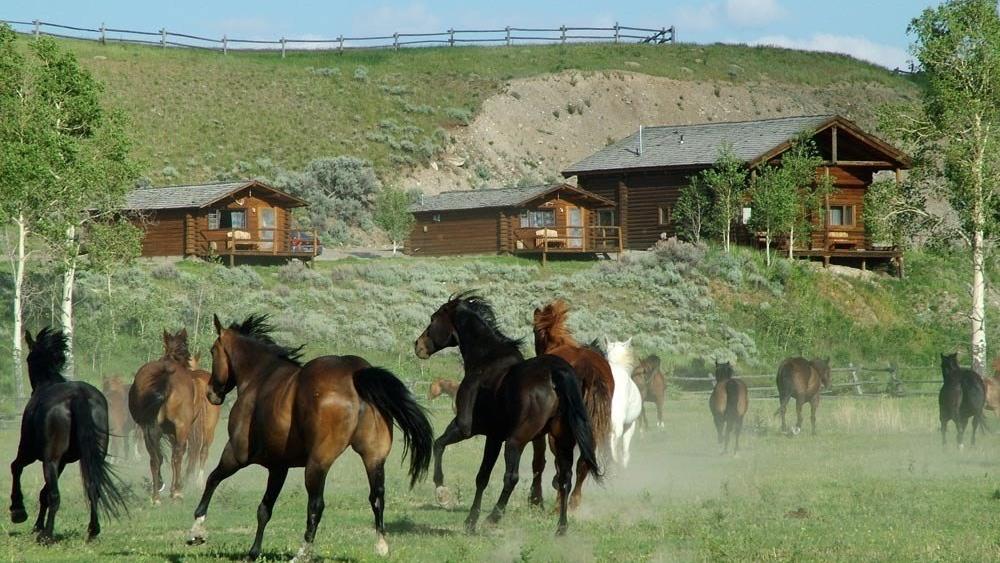 horses-ranch-10.jpg