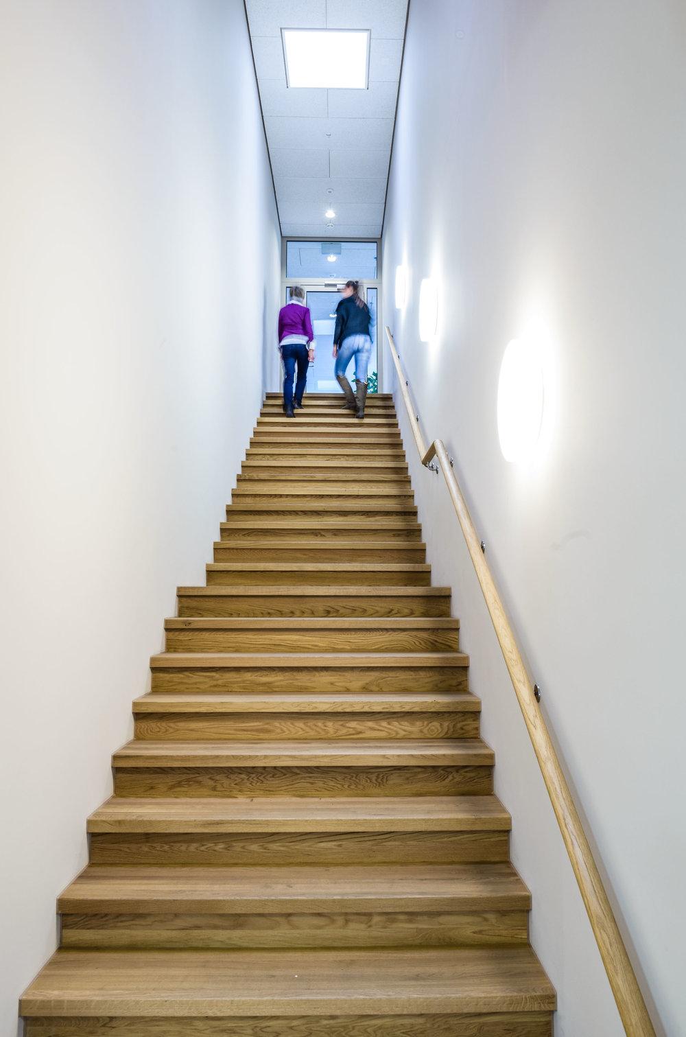 Neubau-Fenstermanufaktur-Holzelementbau-goldach-vogel-treppe.jpg