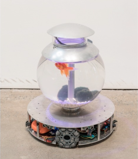 Chando Ao,  I'm a fish , 2019. Installation (fish, pebble, acrylic tank, all-directional motion base, camera vision motion tracking system, python, circuit board, battery), 39cm x 45cm. Courtesy of the artiste and YveYANG Gallery.