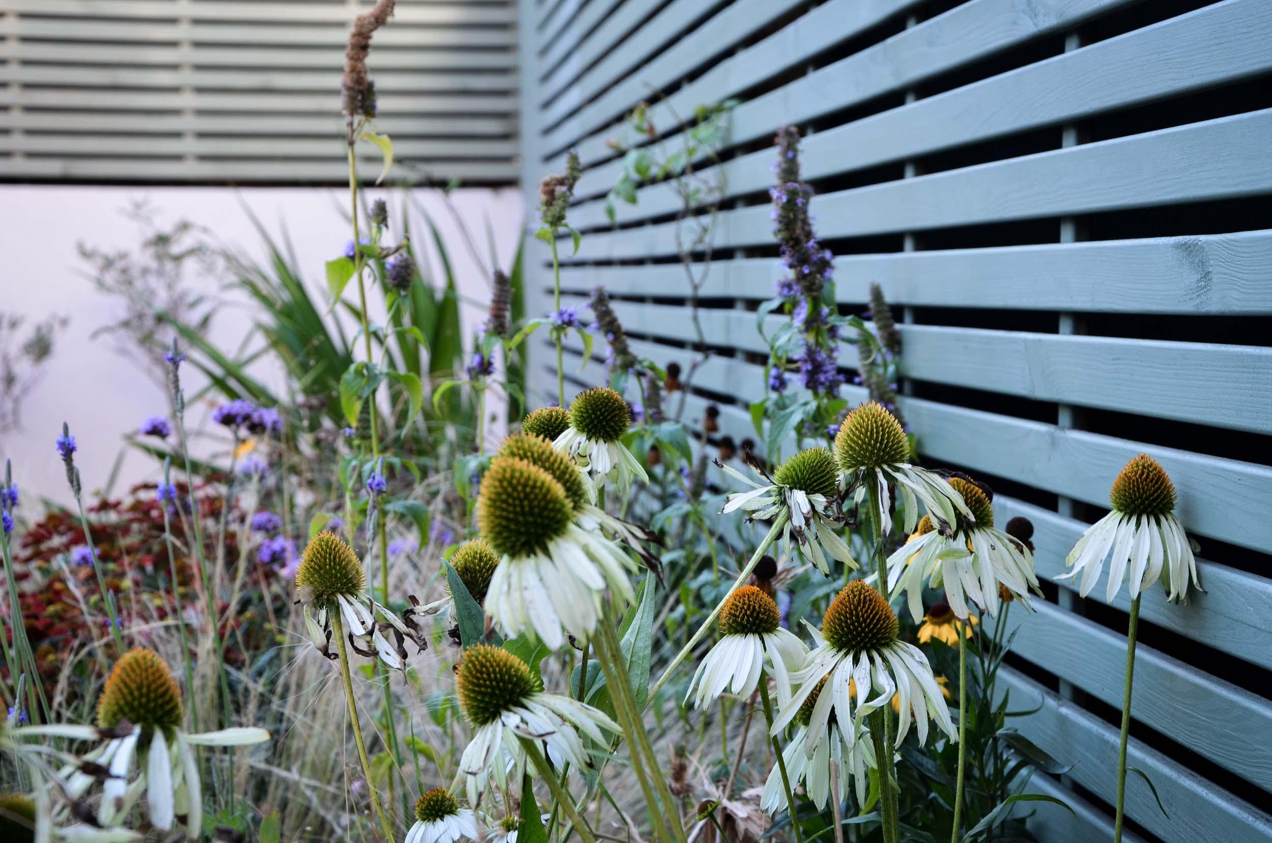 Azara-landscapes-chiswick-small-garden-1.jpg