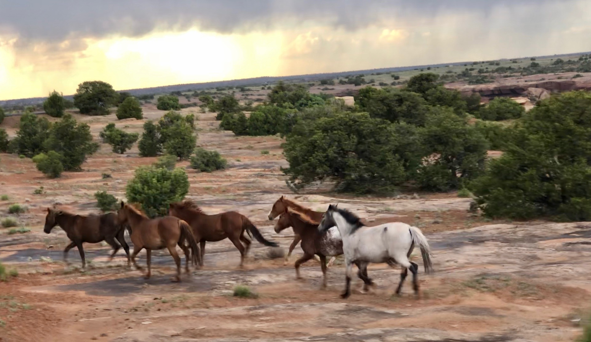 Wild horses (breathtaking!)