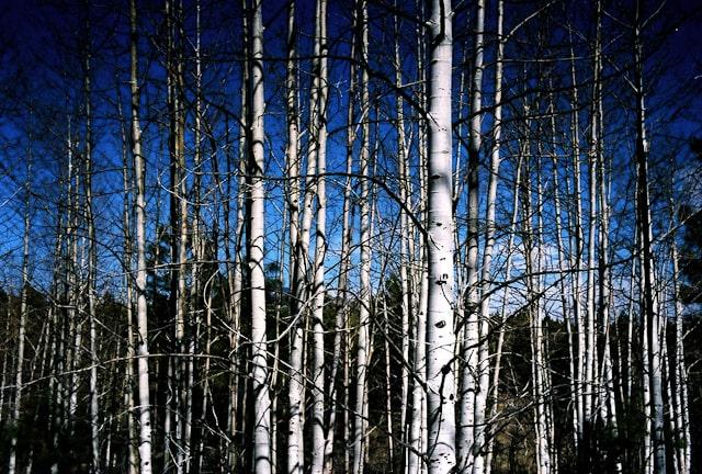 Arkansas Trees-min.jpeg