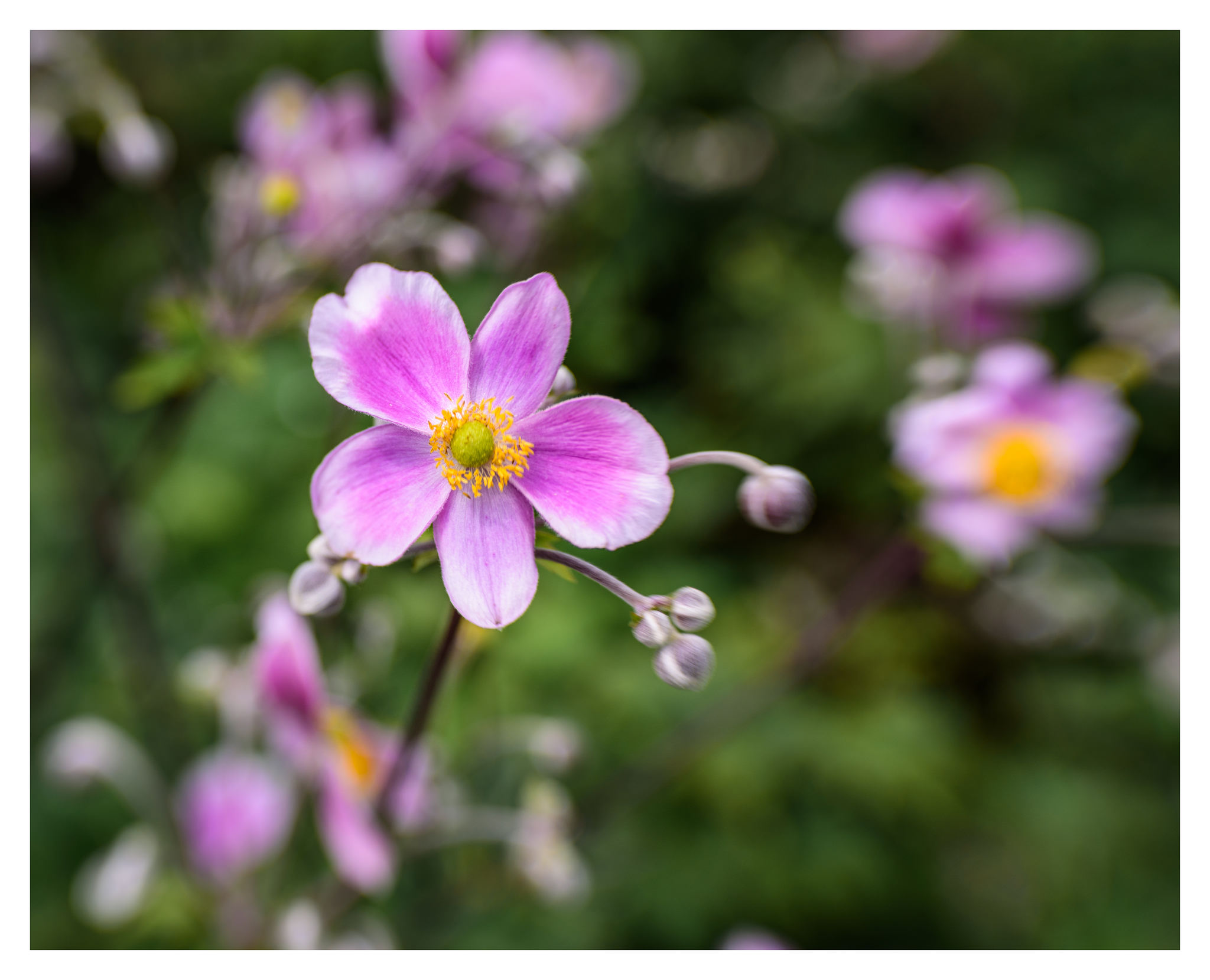 Unknown Flowers at Cox Arboretum MetroPark - Nikon D750 w/Lensbaby Sol 45 lens