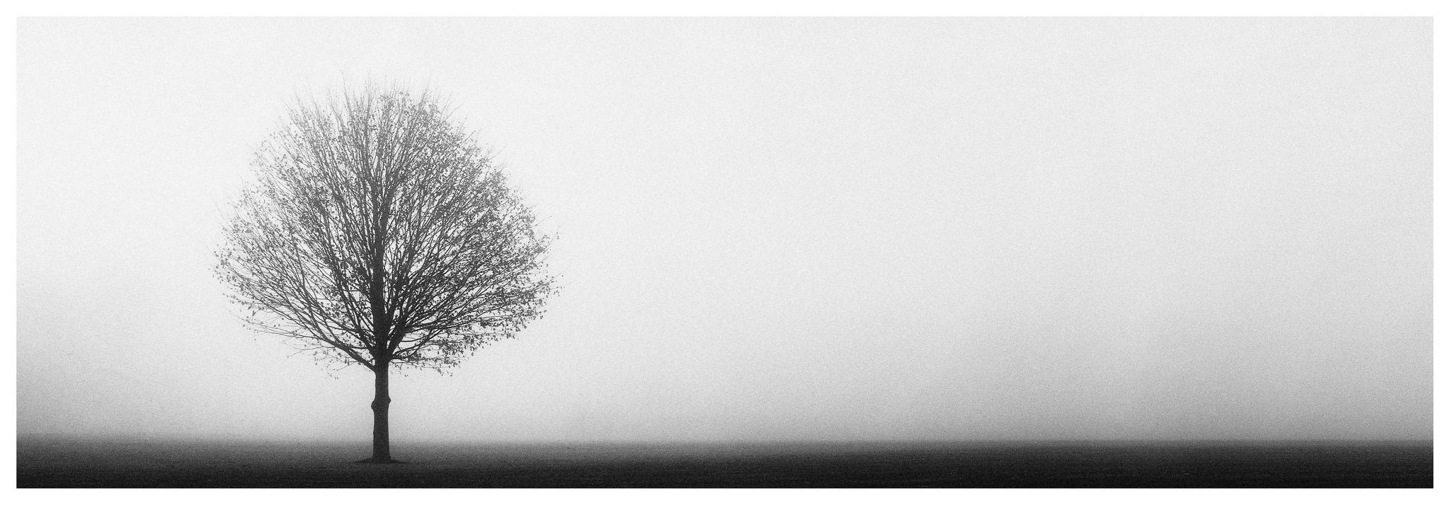 Tree in the Fog. Fuji GX617 on HP5+ film.