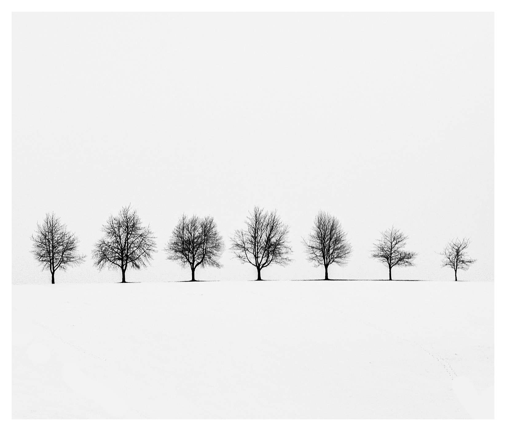 Trees in a snowstorm - image shot in the Black Forest in Germany in 2014 during near white-out conditions.