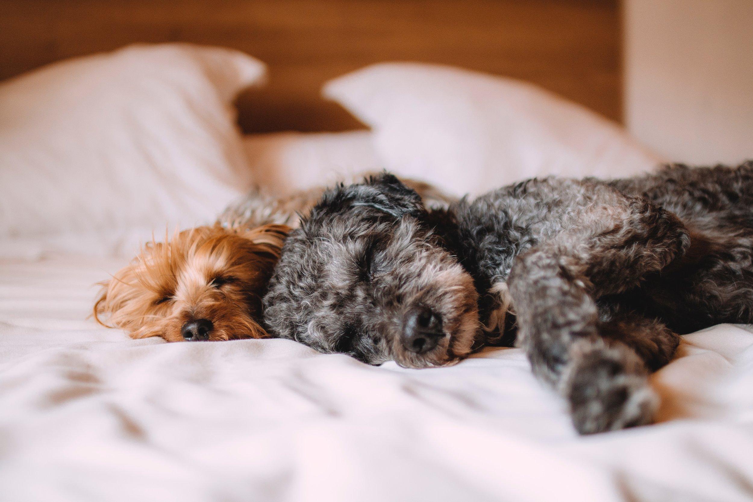 animals-bed-calm-57627.jpg
