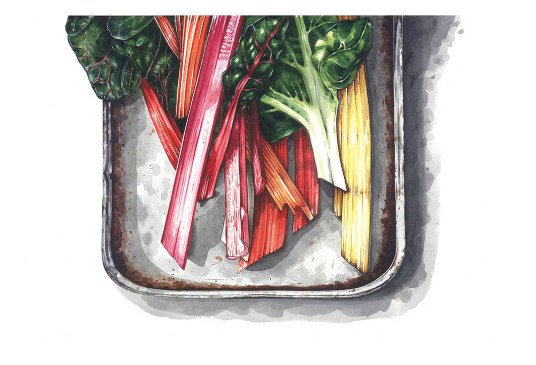 Chard by Lilly Louise Allen.jpg