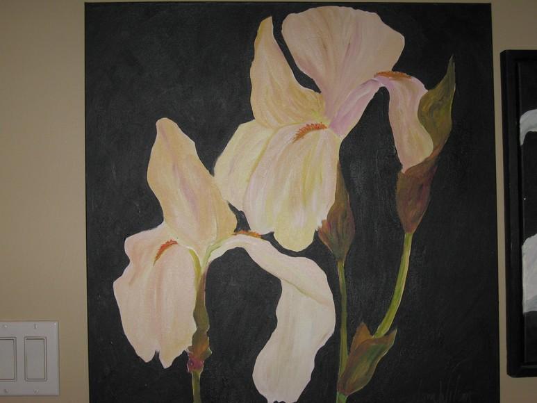 774_Bearded_Iris_Pinkey_Cream_with_Black_Ground_Gallery_Canvas.JPG