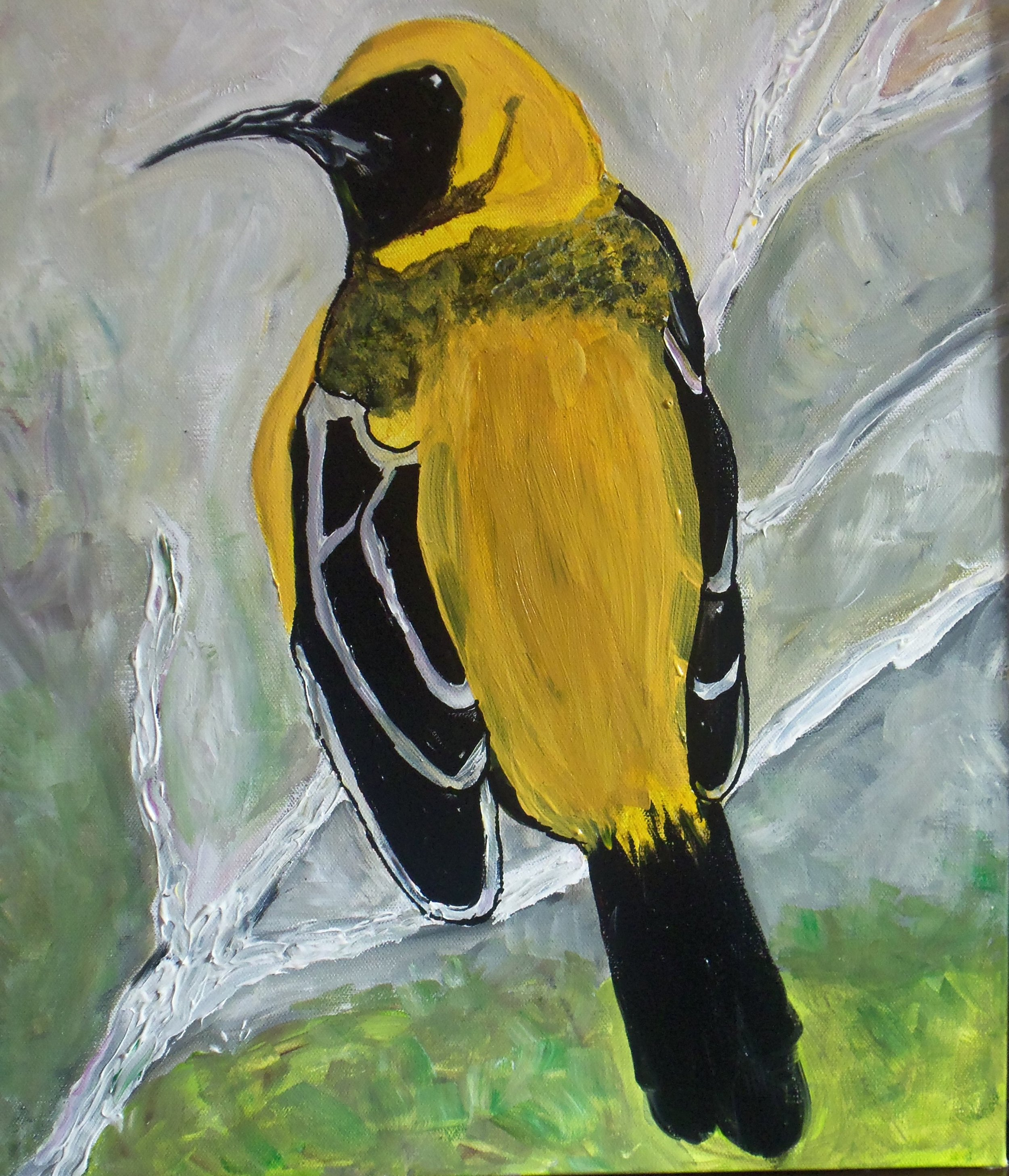lynn wilson - Bird Yellow Black White on white branch of tree with green grey background .JPG