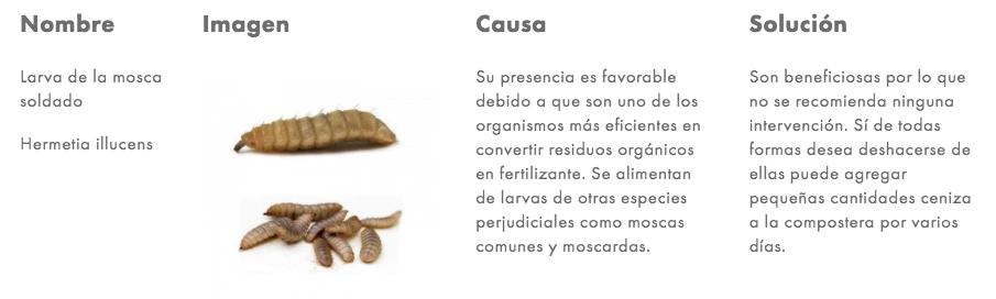 Preg Larva mosca.png