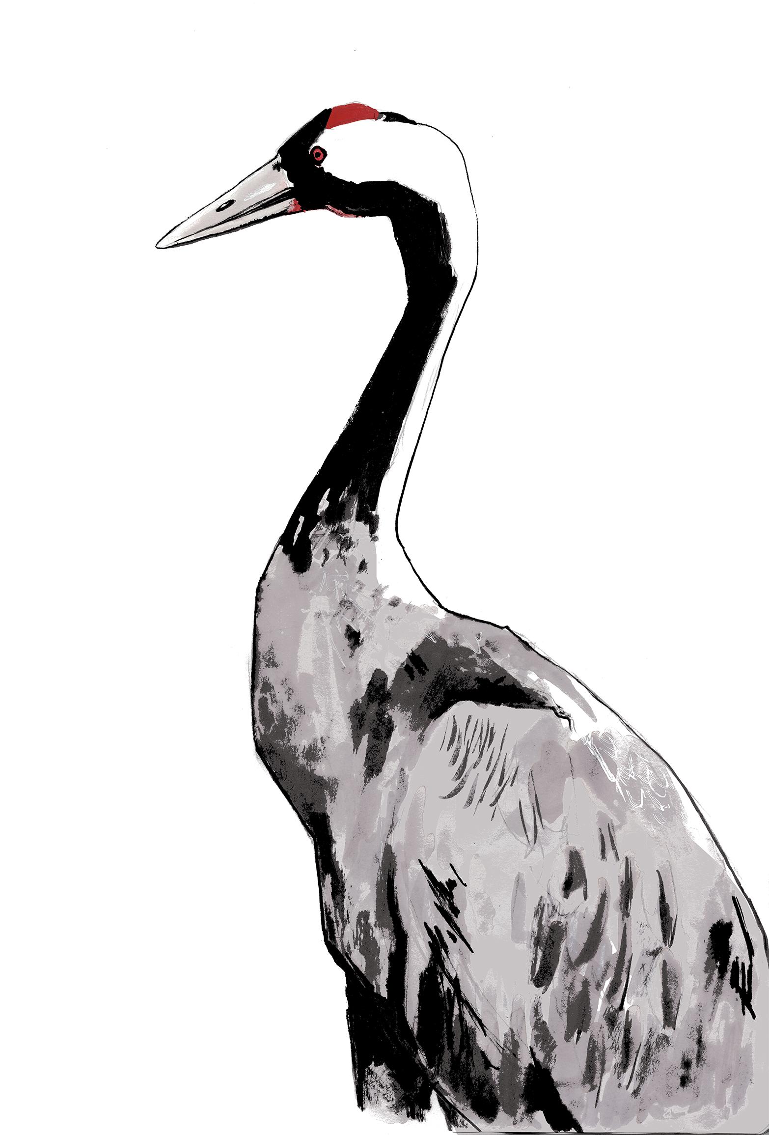toby curden illustration-crane.jpg
