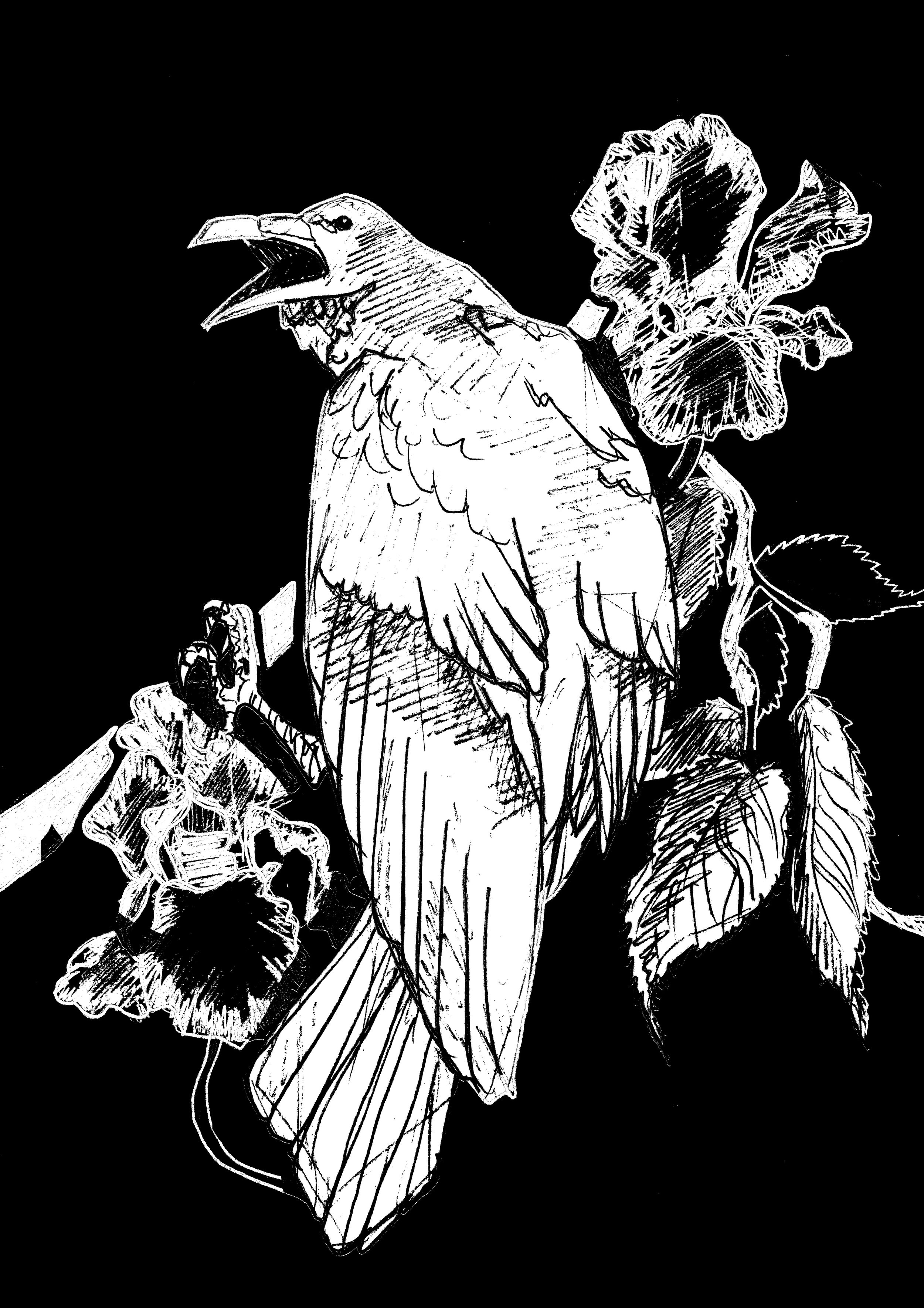 2 raven - kopia.jpg