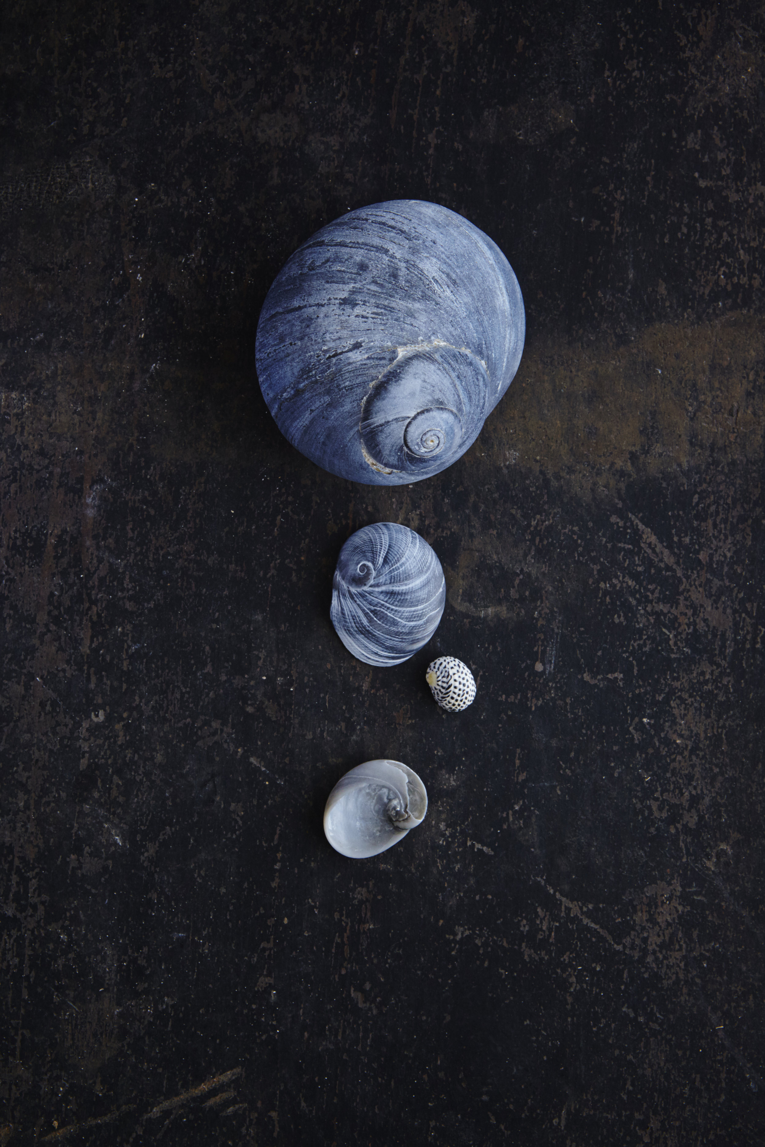 Shells 7-17-1590.jpg