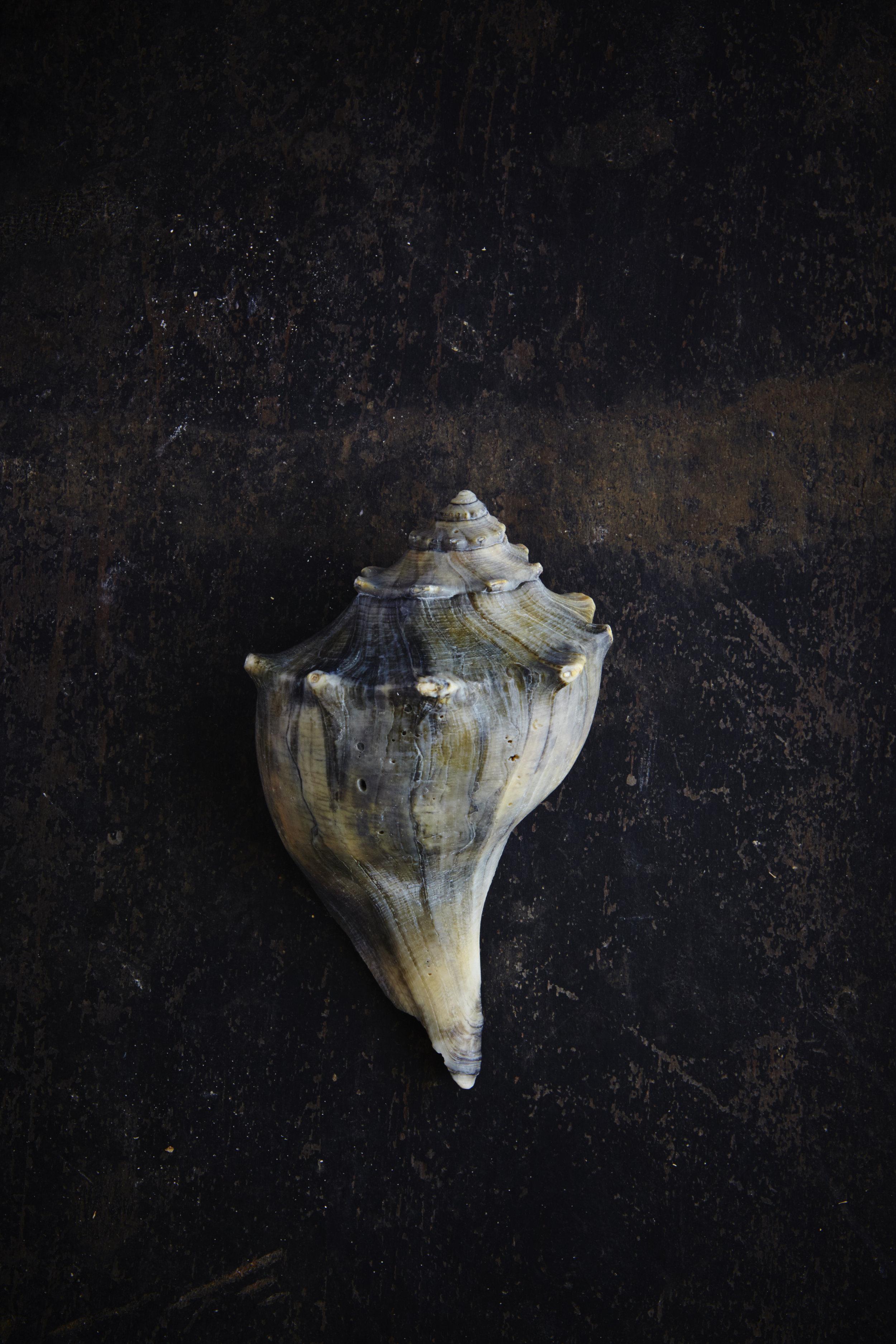 Shells 7-17-1581.jpg