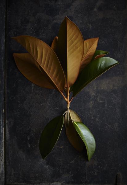 Magnolias40Jun 01 2015©BeckyLuigartStayner.jpg