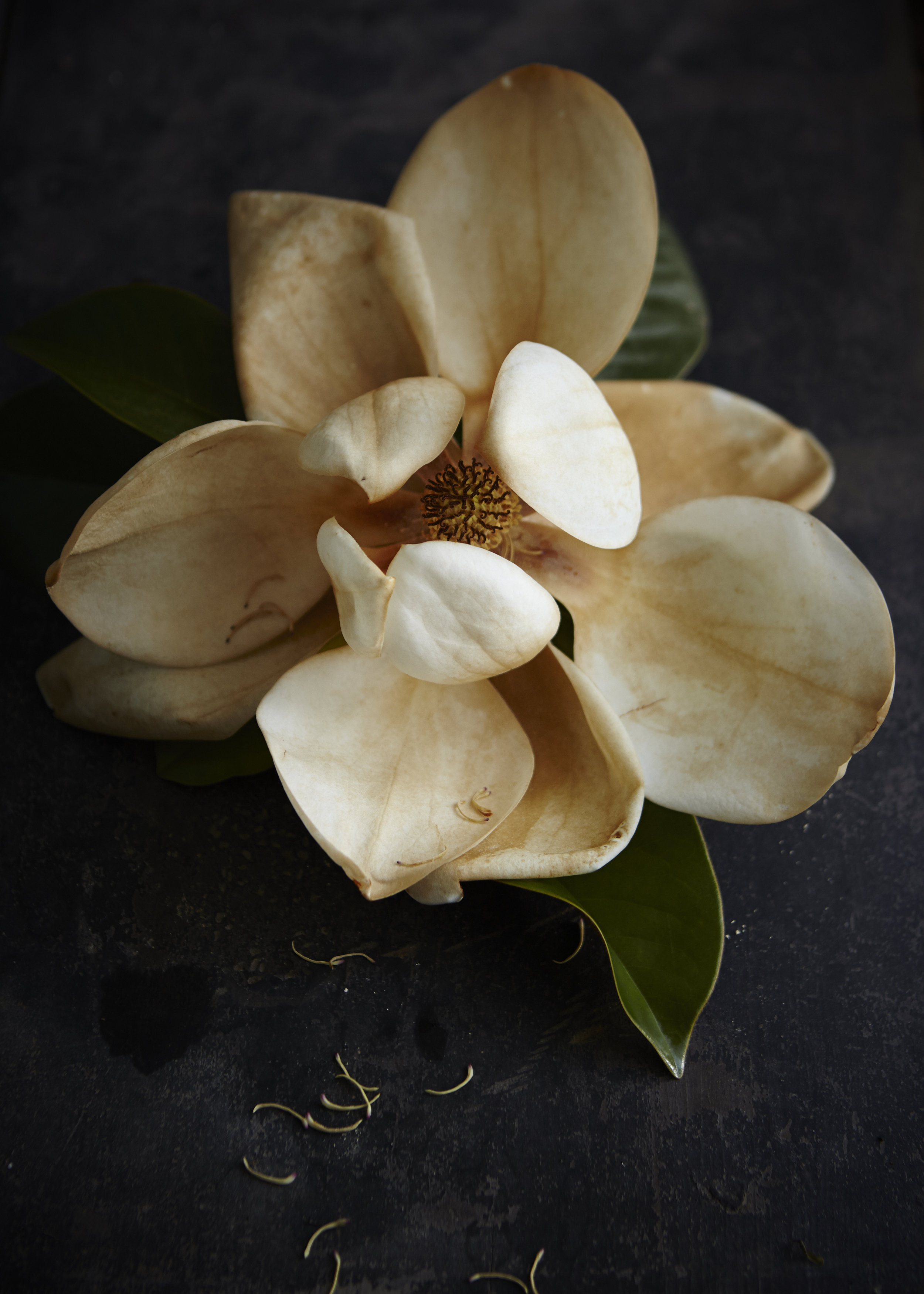 Magnolias119Jun 02 2015©BeckyLuigartStayner.jpg