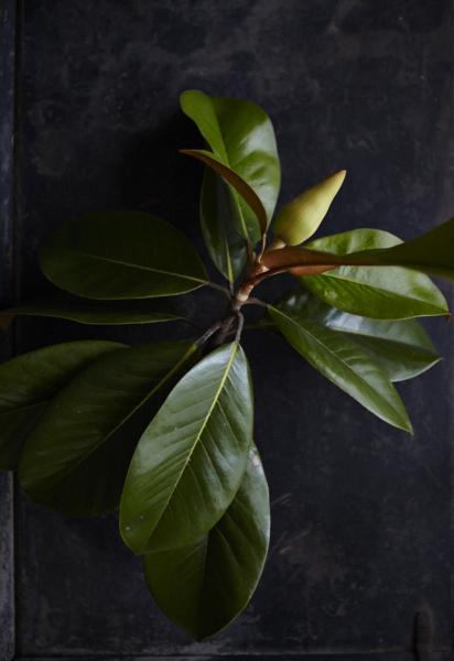 Magnolias66Jun 01 2015©BeckyLuigartStayner.jpg