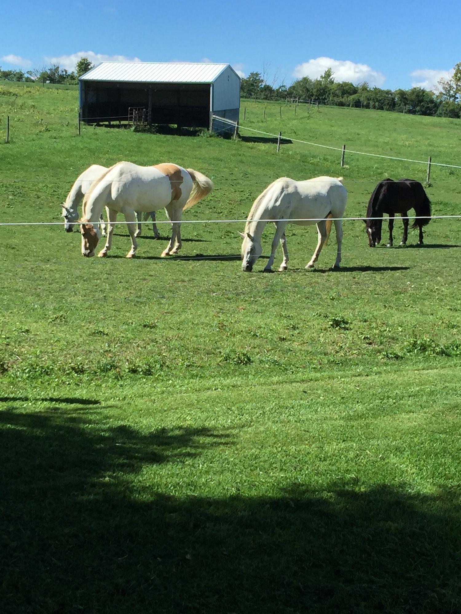 Horses that give us fertilizer