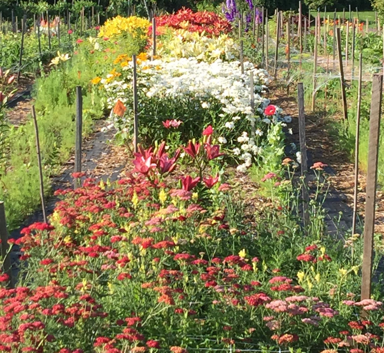 Yarrow, Lilies, Daisies