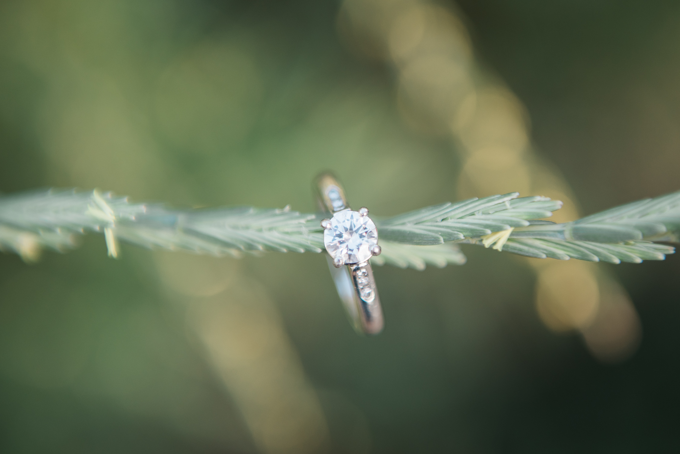 AshleighMillerWeddingPhotographer-Colorado-1265.jpg