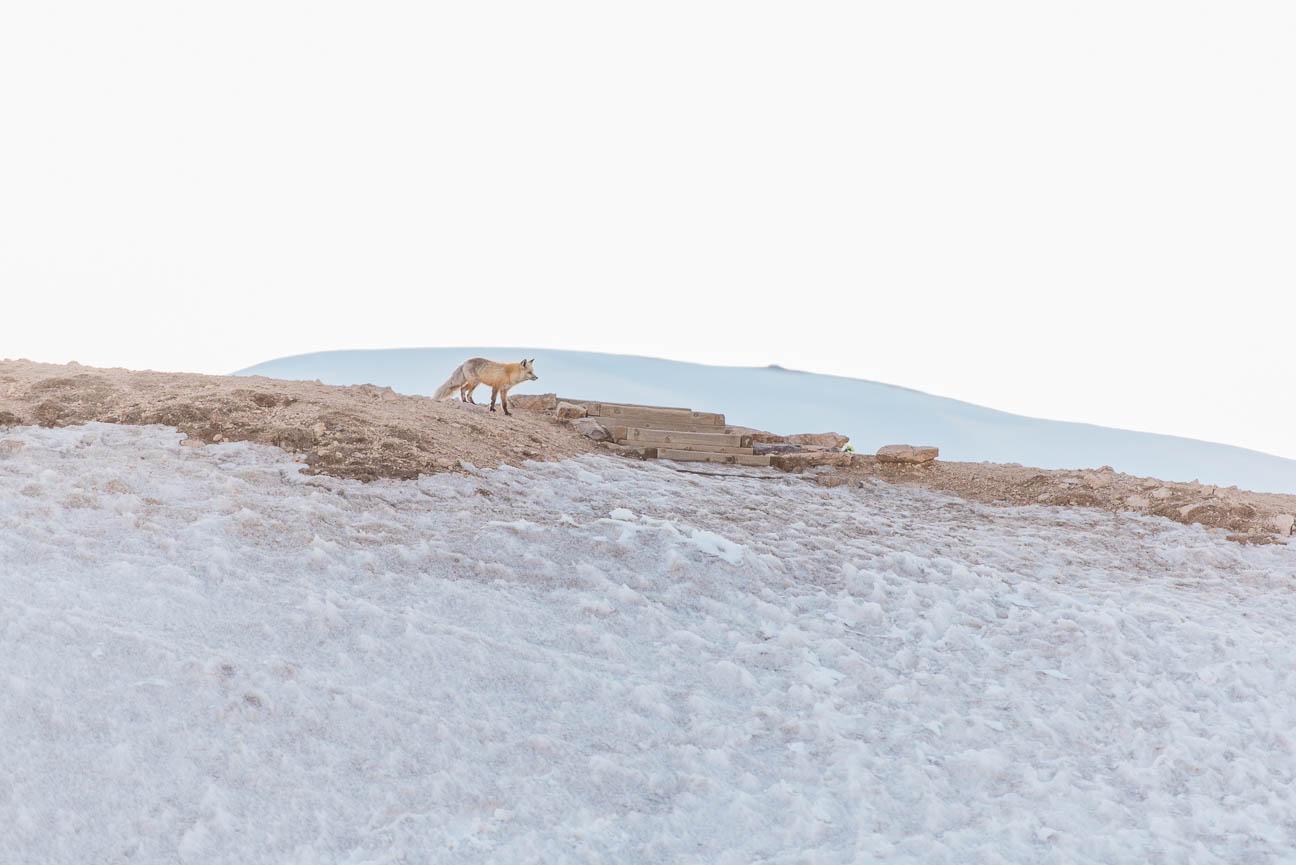ashleigh-miller-photography-adventure--2019-04-19-Becca-Weston-Engagement-Loveland-Pass-1608.jpg