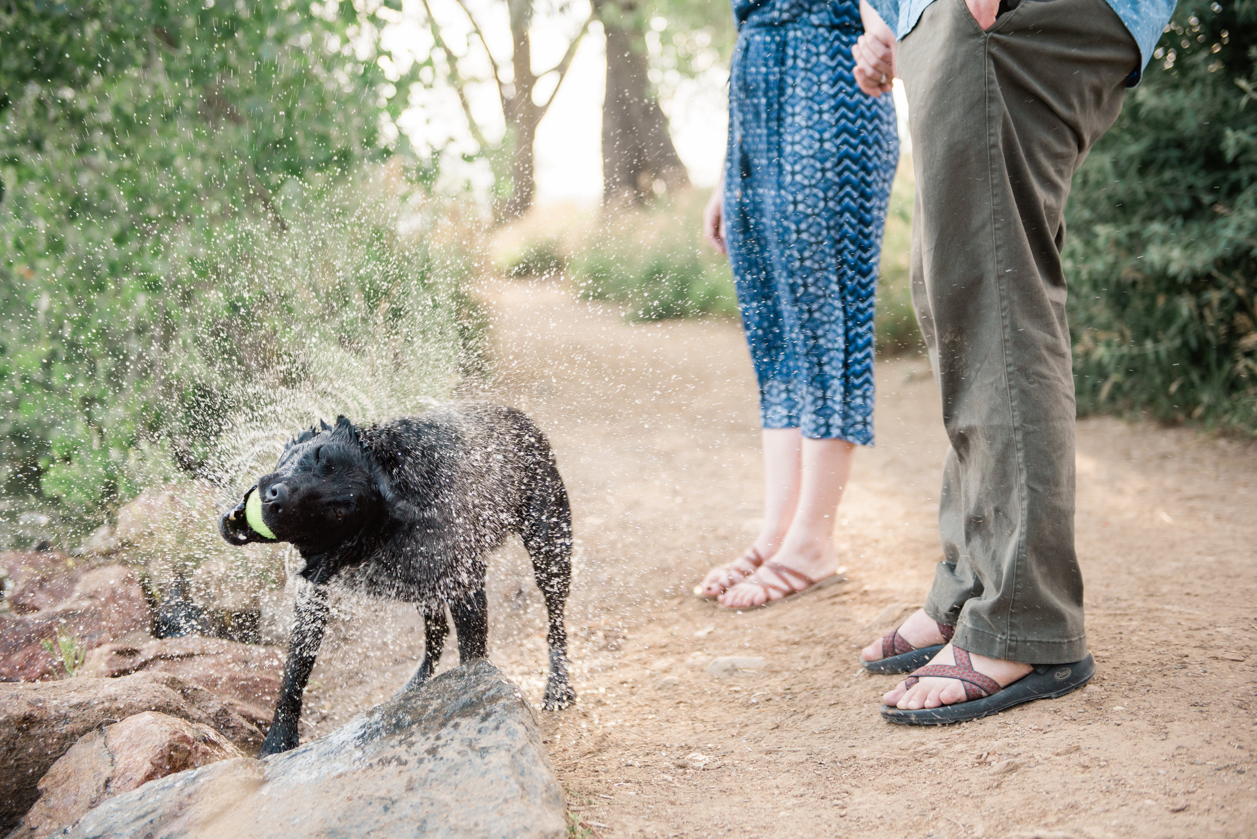 4 Tips for Engagement Session Photographs with your Dog