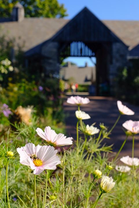 Stone Barns | leavethesandwich.com #stonebarns #farm #ny #bluehill
