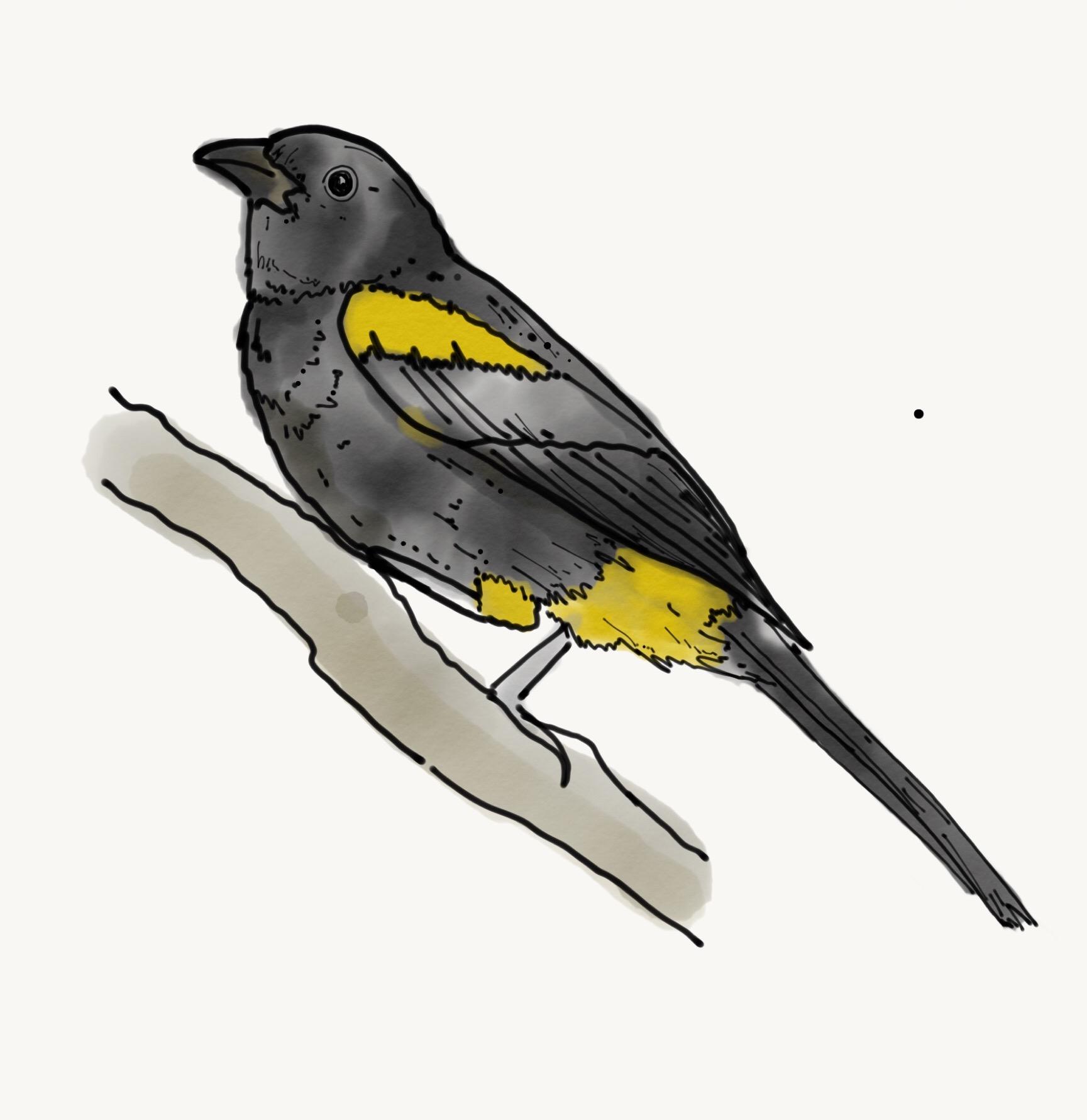 Bird Study.JPG
