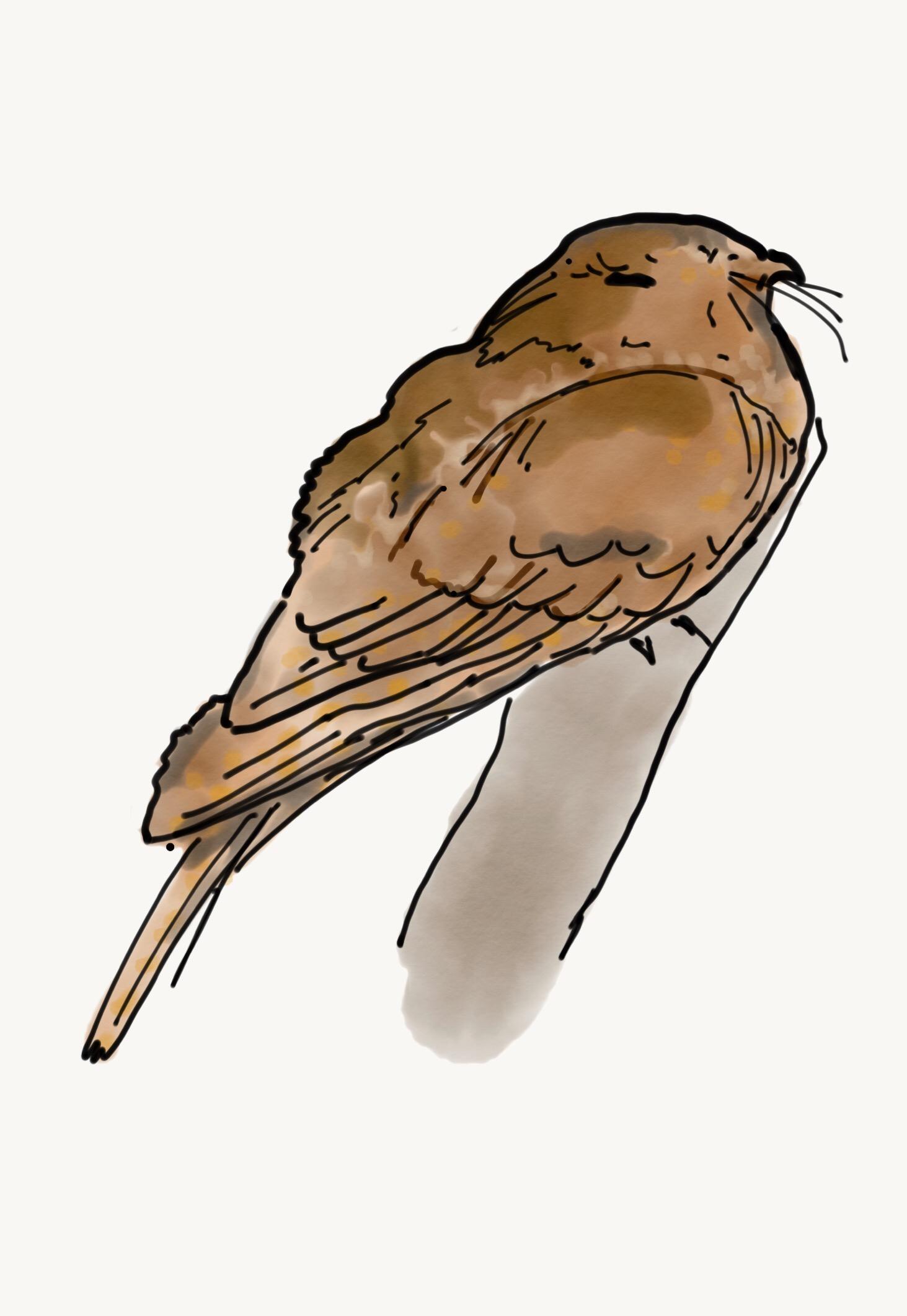 Bird study 2.JPG