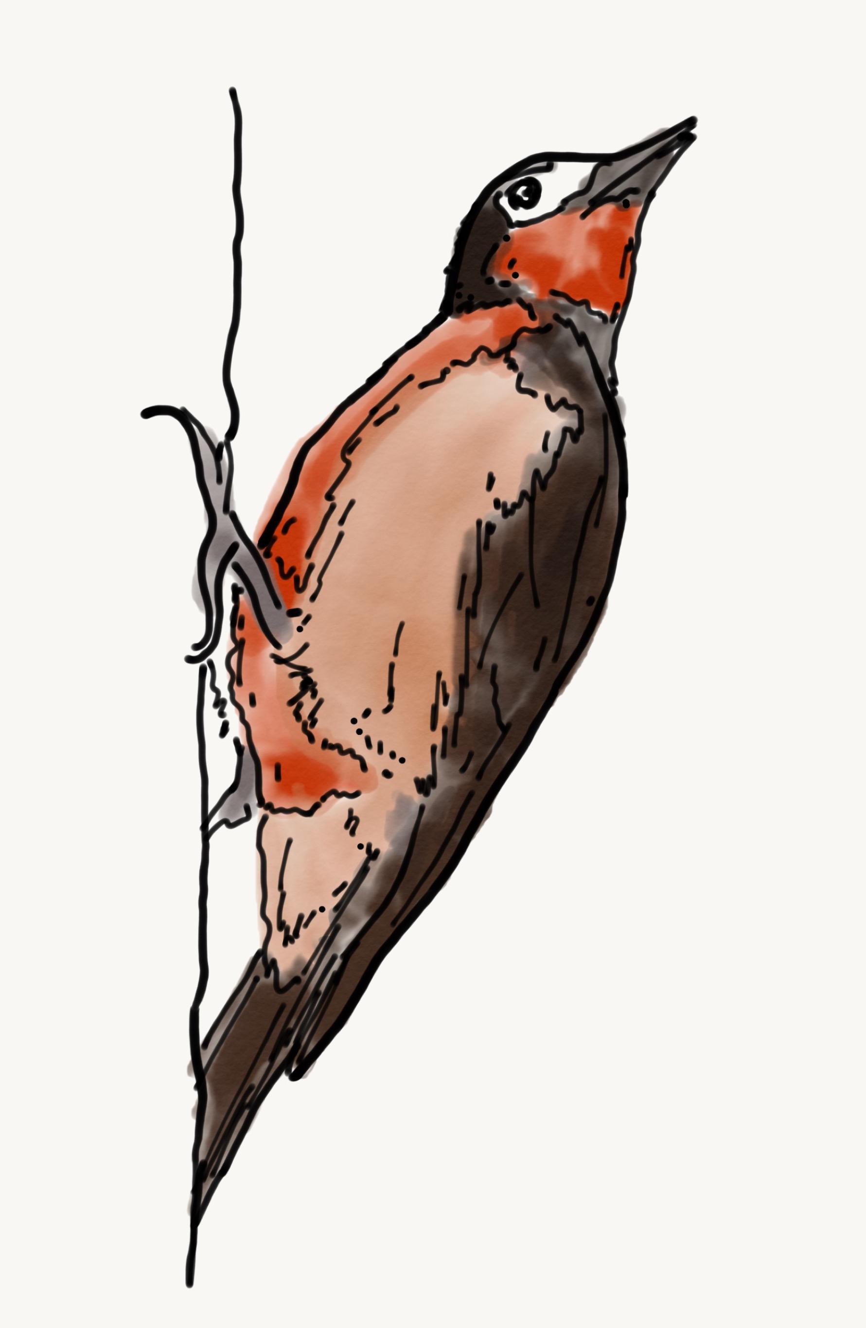 Bird Study 7.jpeg