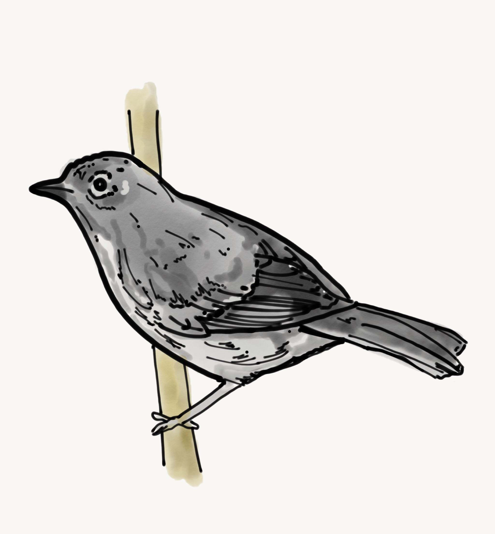 Bird Study 8.jpeg