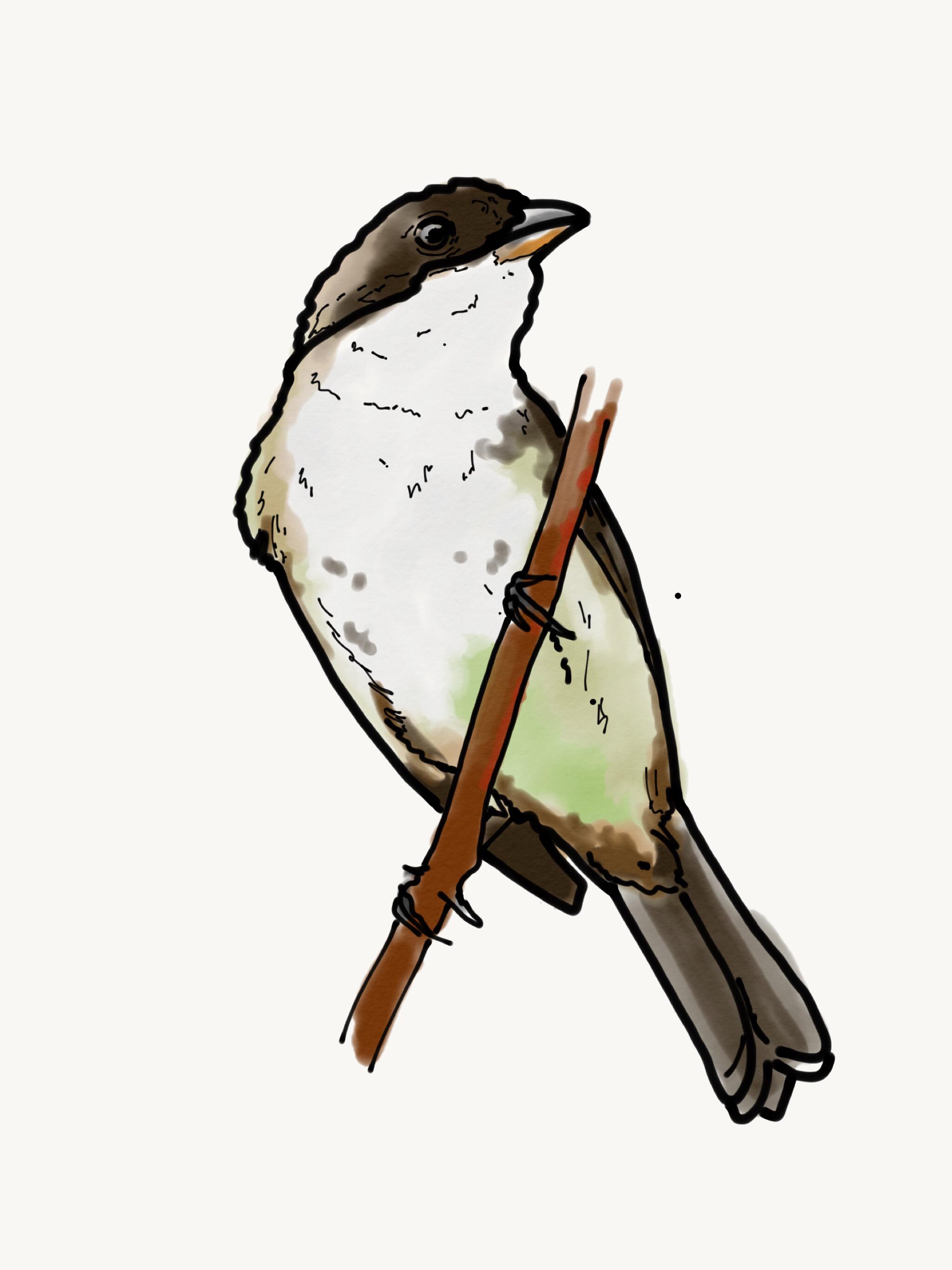 Bird Study 3.PNG