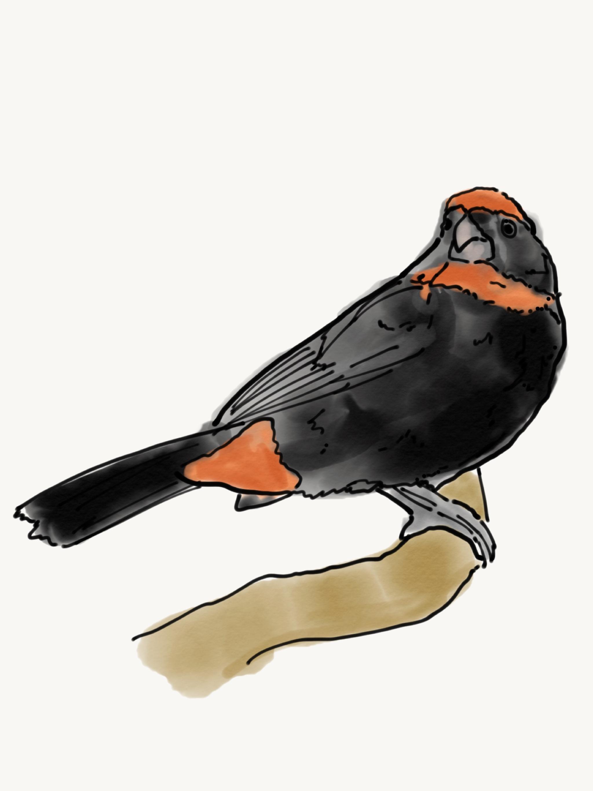 Bird Study 6.PNG