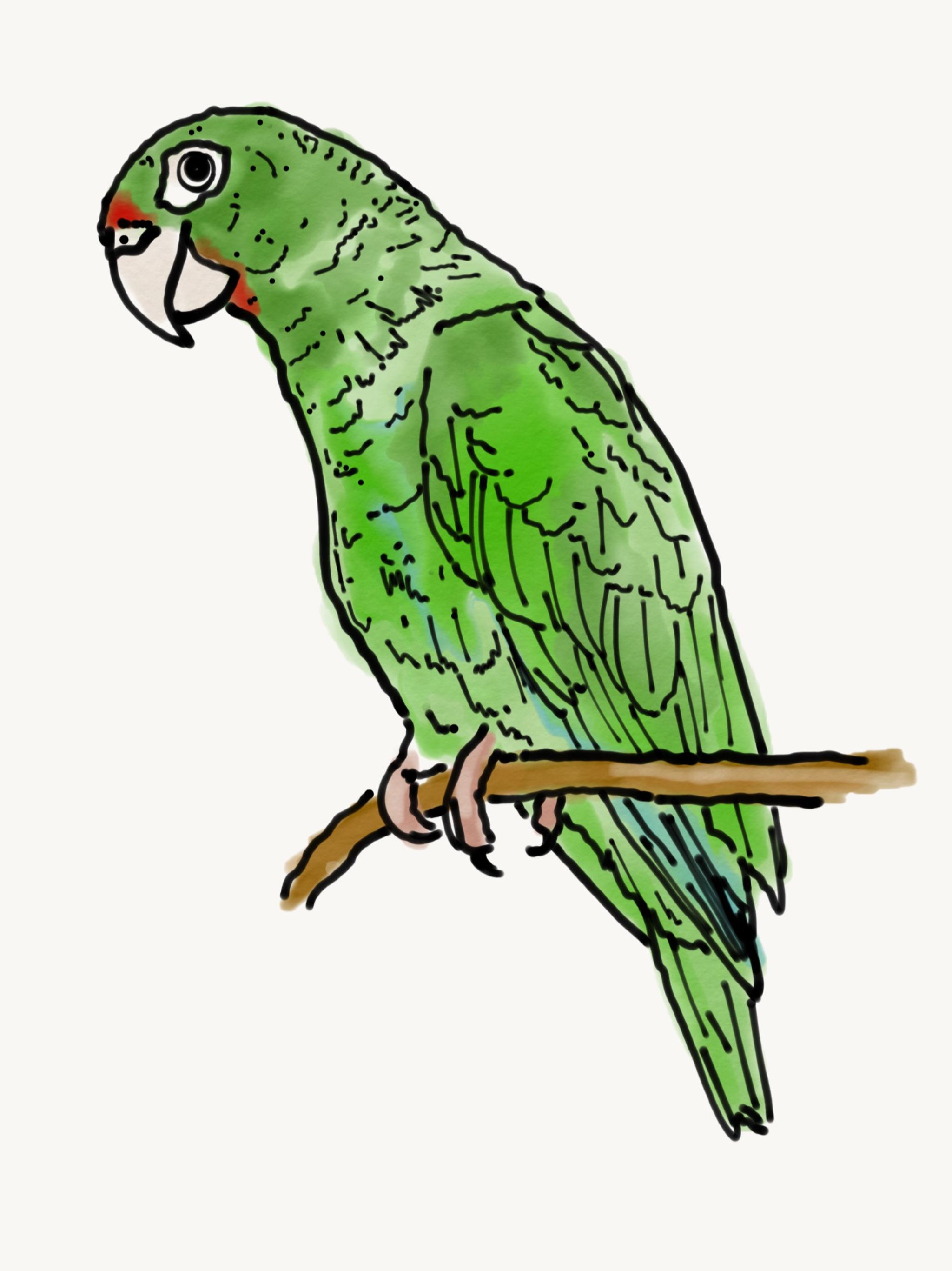 Bird Study 5.PNG