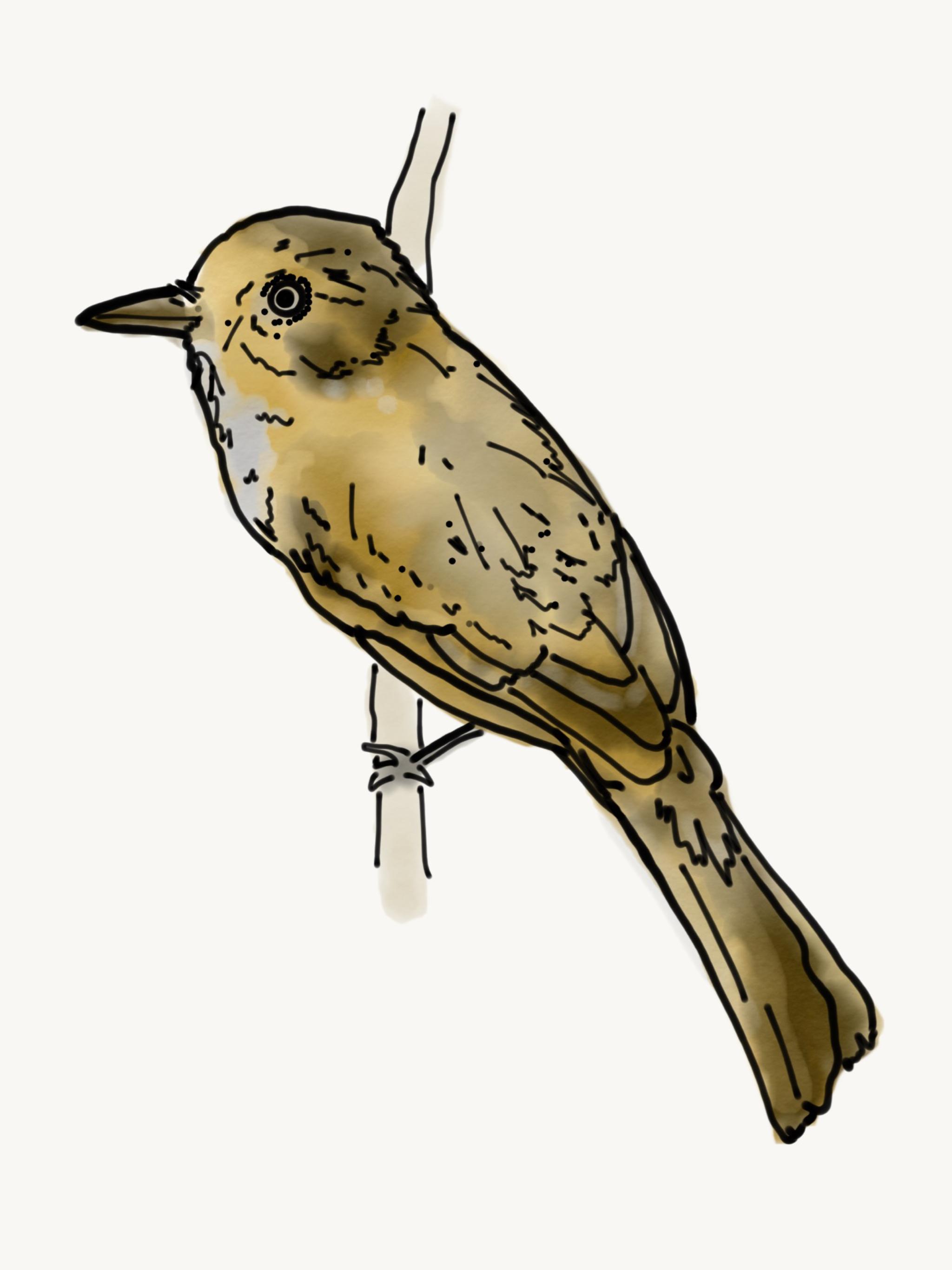 Bird Study 11.PNG