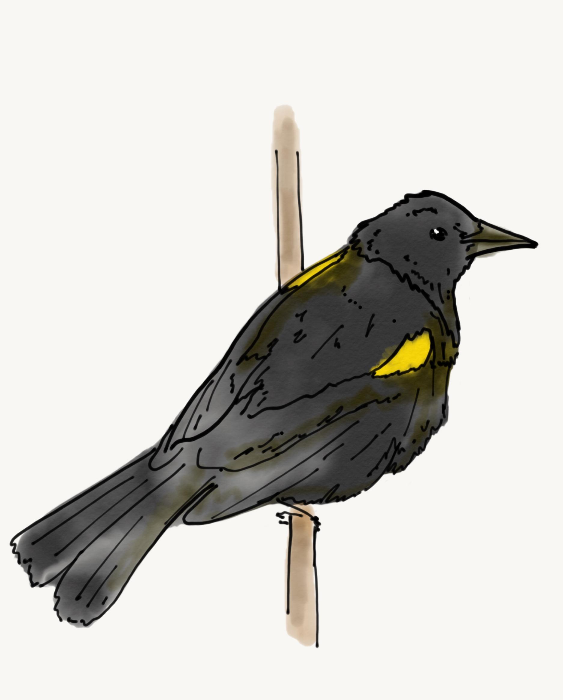 Bird Study 7.PNG